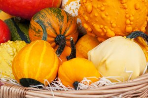 squash and pumpkin 2